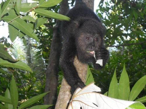 Monkey444
